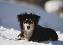Perro en la nieve Foto de archivo libre de regalías