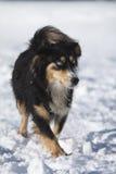 Perro en la nieve Imagen de archivo libre de regalías