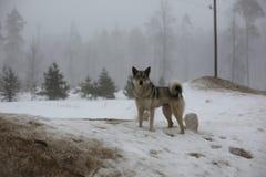 Perro en la nieve Fotos de archivo libres de regalías