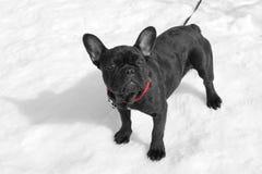 Perro en la nieve Foto de archivo