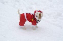 Perro en la nieve con la Navidad traje el 29 de diciembre de 2014 Fotos de archivo