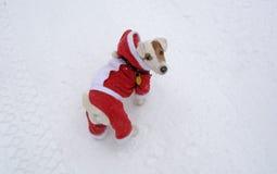 Perro en la nieve con la Navidad traje el 29 de diciembre de 2014 Foto de archivo libre de regalías