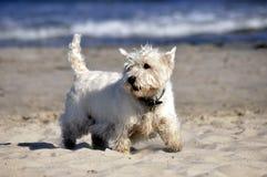 Perro en la playa Imágenes de archivo libres de regalías