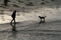 Perro en la playa. Imagen de archivo
