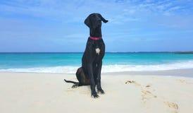 Perro en la playa Imagenes de archivo
