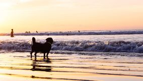 Perro en la playa Fotos de archivo