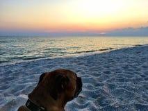 Perro en la playa arenosa en la puesta del sol Foto de archivo