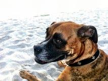 Perro en la playa arenosa en la puesta del sol Imagen de archivo