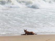 Perro en la playa del mar Imágenes de archivo libres de regalías