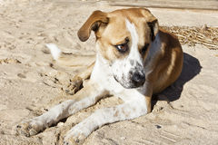 Perro en la playa, el dueño abandonado Fotografía de archivo libre de regalías