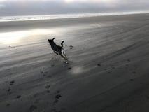 Perro en la playa en la puesta del sol Imagenes de archivo