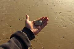 Perro en la playa - mano con la piedra en el fondo de la arena fotografía de archivo