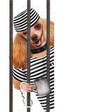 Perro en la prisión. Foto de archivo