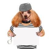Perro en la prisión. fotos de archivo libres de regalías