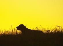 Perro en la puesta del sol Foto de archivo libre de regalías