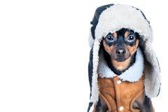 Perro en la ropa aislada, espacio para el texto Ese terrier en un sombrero w Fotos de archivo libres de regalías
