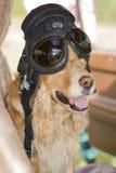 Perro en la rueda de un coche en un casco de cuero Fotografía de archivo