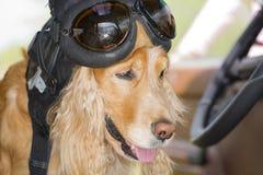 Perro en la rueda de un coche en un casco de cuero Imágenes de archivo libres de regalías