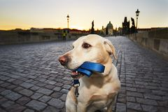 Perro en la salida del sol Imagen de archivo libre de regalías