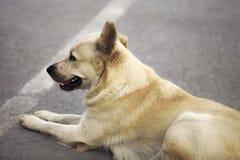 Perro en la sentada del camino Imagenes de archivo