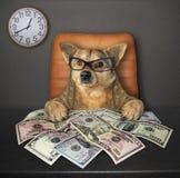 Perro en la tabla con los dólares 3 fotografía de archivo