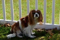 Perro en la valla de estacas Fotografía de archivo