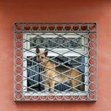 Perro en la ventana Imagen de archivo libre de regalías