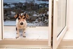 Perro en la ventana abierta en invierno escarchado frío fotos de archivo