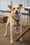 Perro en la yarda fotografía de archivo