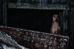 perro en la yarda en la vertiente Imágenes de archivo libres de regalías