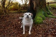 Perro en las maderas. Fotografía de archivo