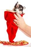 Perro en las manos aisladas en el fondo blanco Fotografía de archivo
