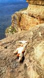 Perro en las montañas Fotos de archivo