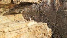Perro en las montañas Imagen de archivo