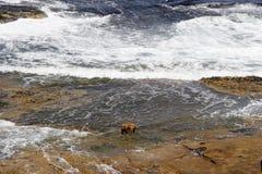 Perro en las rocas Foto de archivo libre de regalías