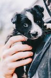 Perro en manos Imagen de archivo libre de regalías