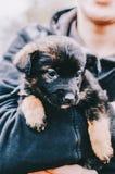 Perro en manos Imágenes de archivo libres de regalías