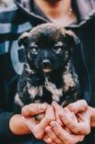 Perro en manos Fotografía de archivo