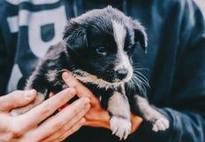 Perro en manos Fotos de archivo