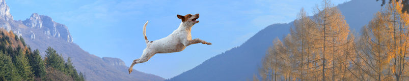 Perro en montañas Fotos de archivo libres de regalías