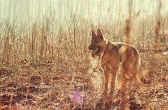 Perro en naturaleza fotografía de archivo