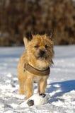 Perro en nieve Imagenes de archivo