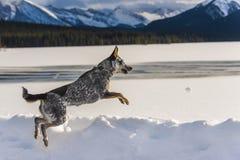 Perro en nieve Imágenes de archivo libres de regalías