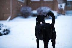 Perro en nieve foto de archivo libre de regalías