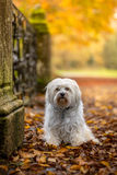 Perro en otoño Imagen de archivo libre de regalías