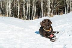Perro en parque Foto de archivo libre de regalías
