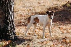 Perro en parque outdoors fotos de archivo libres de regalías