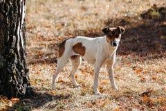 Perro en parque outdoors imágenes de archivo libres de regalías