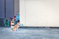 Perro en patio trasero Imagen de archivo libre de regalías