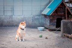 Perro en patio trasero Fotografía de archivo libre de regalías